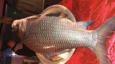 কাতলা মাছটির দাম ১ লাখ ২০ হাজার টাকা