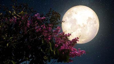 বছরের শেষ 'ফ্লাওয়ার' সুপারমুনের দেখা মিলবে আজ