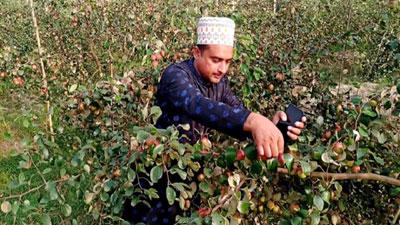 কাশ্মীরি নুরানি আপেল কুল চাষে বদলে প্রবাসী লিয়াকতের ভাগ্য