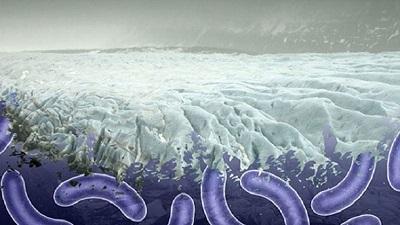 লাখো বছরের পুরনো ভাইরাস সক্রিয় হচ্ছে, বড় বিপর্যয়ের শঙ্কা