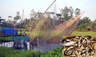 বিলুপ্তির পথে অর্ধশত প্রজাতির দেশি মাছ
