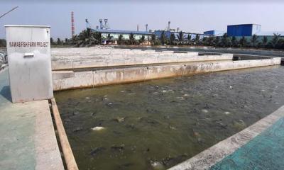 আইপিআরএস পদ্ধতিতে উৎপাদিত মাছ রপ্তানীতে আশাবাদী চাষী আকবর