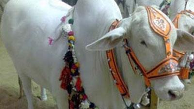 ভারতে গরুর মাংস নিষিদ্ধের আবেদন খারিজ