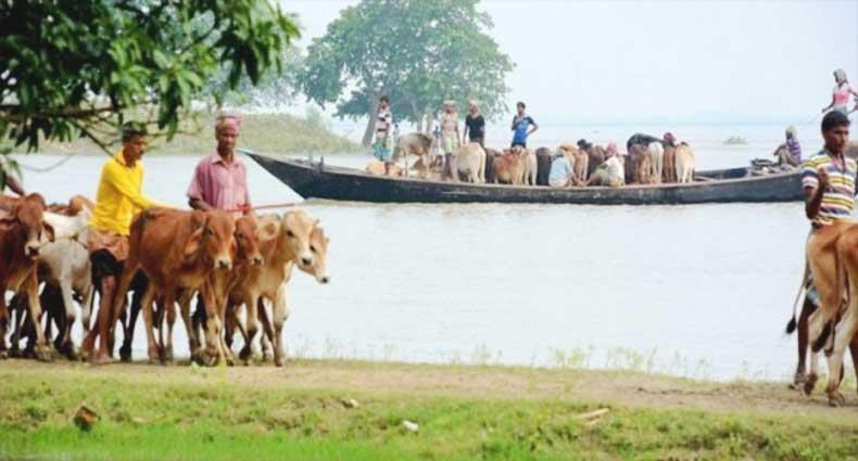 সীমান্ত দিয়ে আসছে 'জীবাণুবাহী' গরু