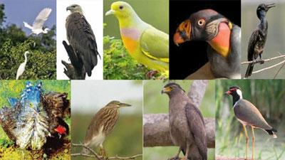 ঝিনাইদহে ৪৬ প্রজাতির পাখি বিলুপ্তির পথে!