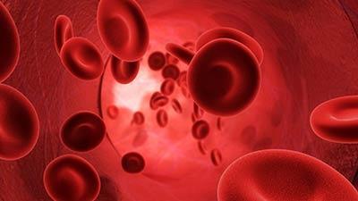 রক্ত চলাচল বাড়াতে সহায়ক কিছু প্রাকৃতিক উপাদান