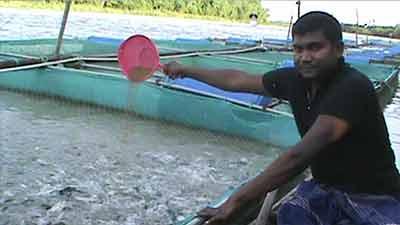 ভাসমান খাঁচায় মাছ চাষে সফল জাহিদ
