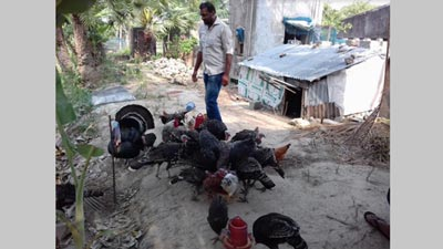 হাঁস-টার্কির খামার করে স্বাবলম্বী হেলালুজ্জামান
