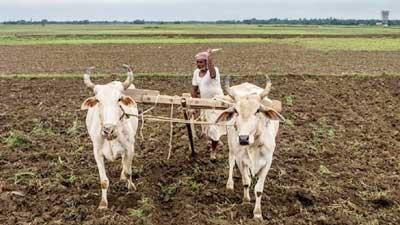 তিনমাসে ৬৩৯ ভারতীয় কৃষকের আত্মহত্যা