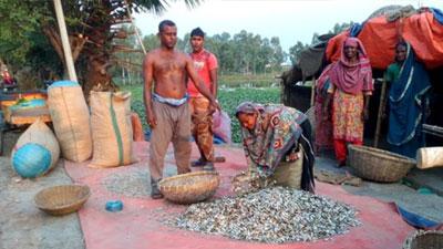 মাছ সংকটের শুঁটকি ব্যবসায়ীরা বিপাকে