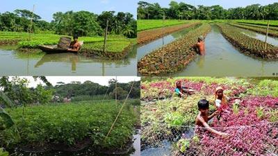 'নিরাপদ সবজি' চাষে লাভবান গোপালগঞ্জের কৃষকরা